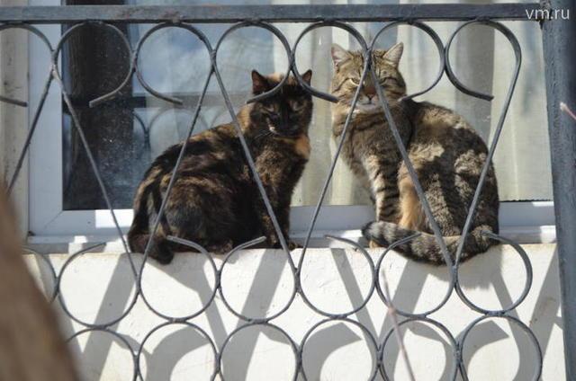 Животные получат свободный доступ в подвалы жилых домов