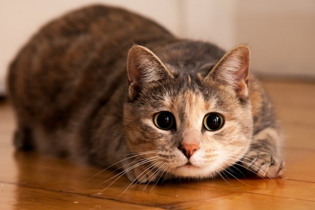 Арендаторы квартиры завели котят – какие права у собственника?