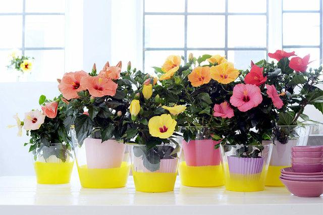 5 комнатных растений для холостяков