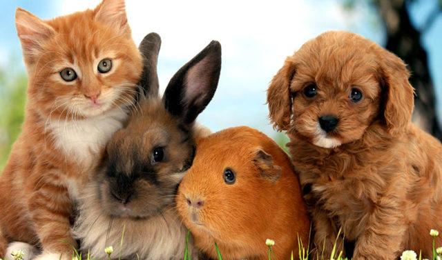 Госдума хочет ограничить число животных в квартирах