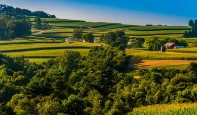 Предложение: увеличить срок аренды лесных участков