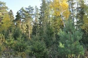 Минприроды хочет разрешить строительство в лесах
