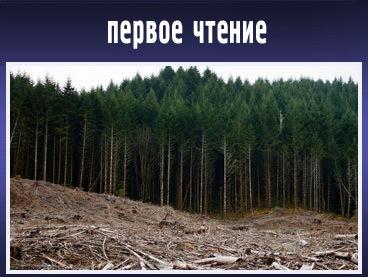 Законопроект о лесной амнистии прошел первое чтение в ГД