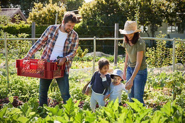 Мнение: новый закон ужесточит требования к садоводам и дачникам