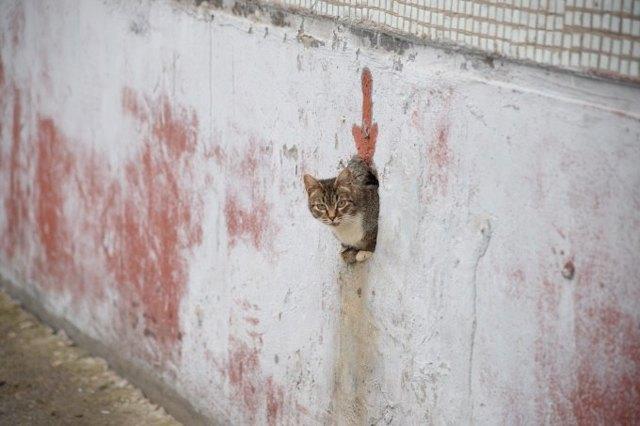 Подвалы домов могут перестать закрывать от кошек