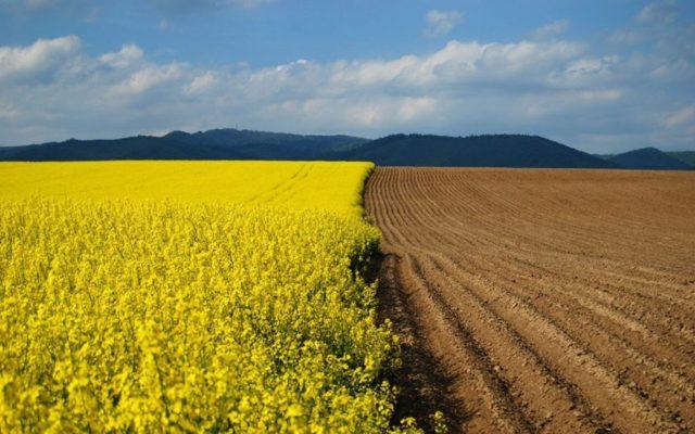 В Подмосковье переводить сельхозземли в другие категории станет сложнее