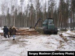 Под Петербургом разгорается скандал вокруг застройки лесных территорий